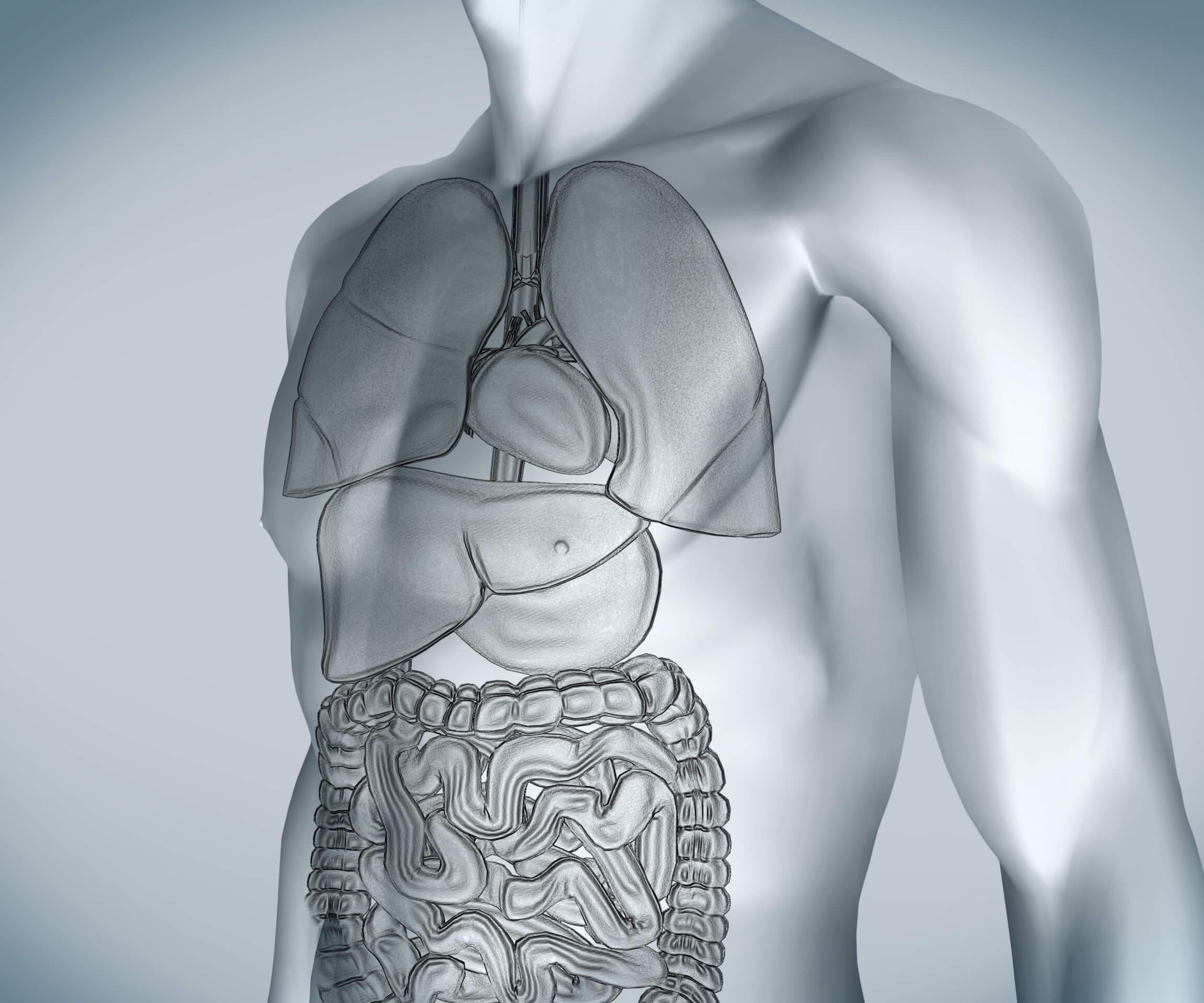 Cálculo na Vesícula: tudo que precisa saber para diagnosticar e tratar!